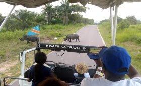 Travel to Congo Tracking the White Rhinoceros, Parc de la vallée de N'sele