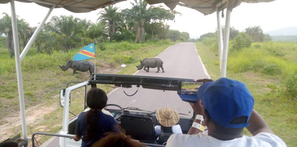 visit kinshasa white rhinos